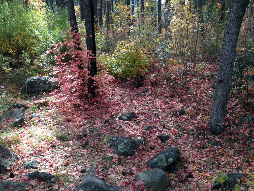 Fall Colors in Coconino Forest